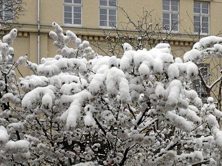 snjeg idjot na ulizje
